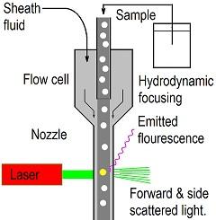 Flow-Cytometry-Diagram3