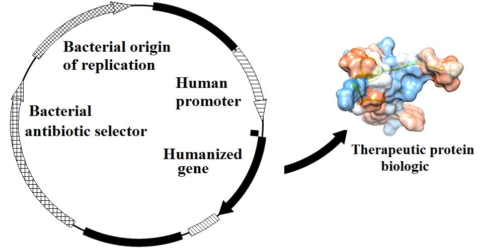 Gene-therapy-plasmid