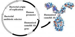 plasmid + Ab diagram
